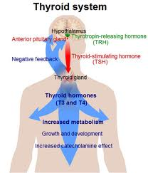 Symptoms of Hypothyroid Conditions